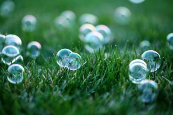 Bubbles Grass   HiroBoga.com