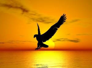 Sunset Eagle   HiroBoga.com