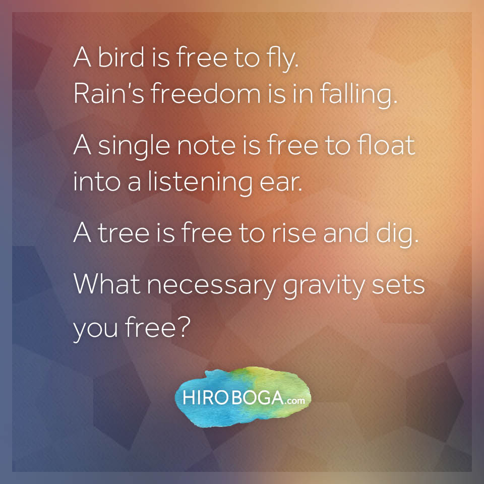 a-bird-is-free-to-fly